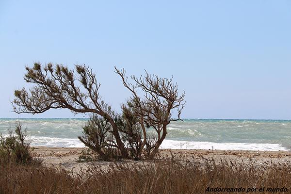 Playa Virgen de Reserva Natural