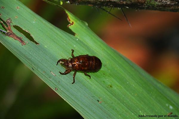 Insectos - Tortuguero