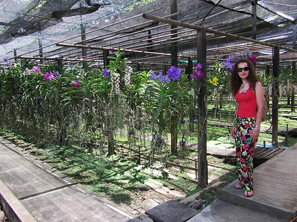 Vivero orquídeas
