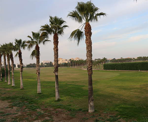 Campo de Golf Playa Serena