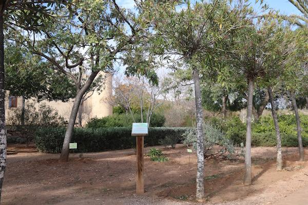 Andorreando Jardin Albardinal