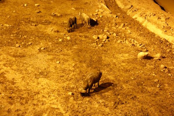 Bufalos Parque Nacional Aberdare-Andorreando por el Mundo.