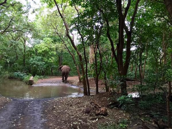 Elefante Lago Manyara-Andorreando por el Mundo