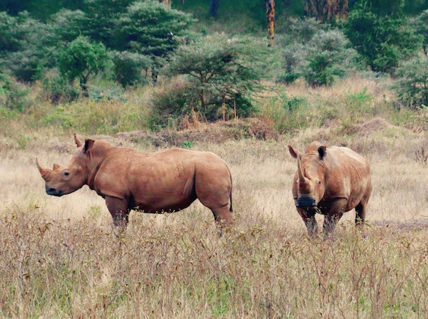 Rinocerontes Parque Nacional Lago Nakuru