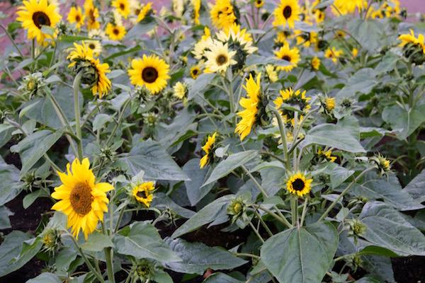Flores Parque Albert-Andorreando por el Mundo