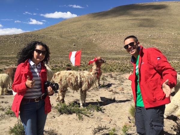 Llama- Perú