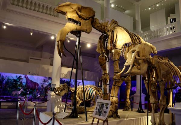 Esqueletos Museo Historia Grigore Antipa