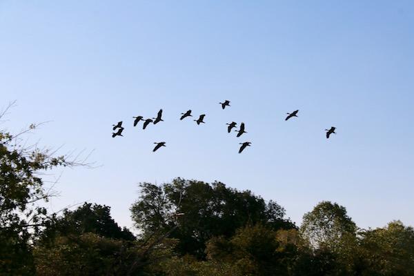 Banda Pájaros