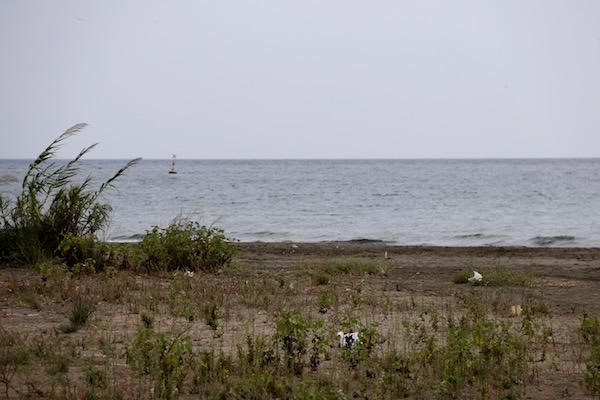 Playa de las Azucenas