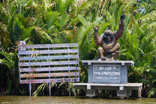 Welcome To Tanjung Puting