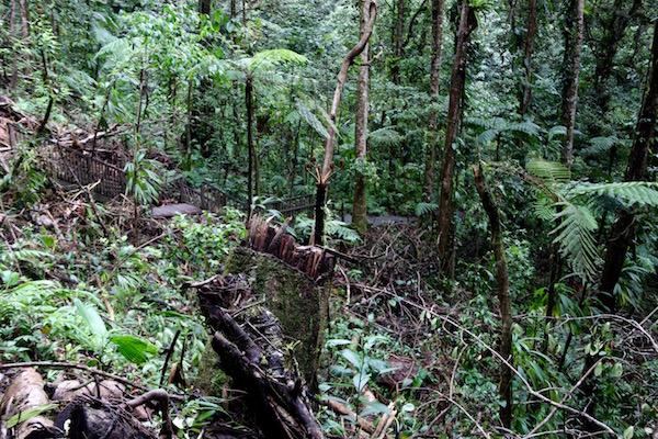 Parque Nacional Guadalupe Destrozado Huracán