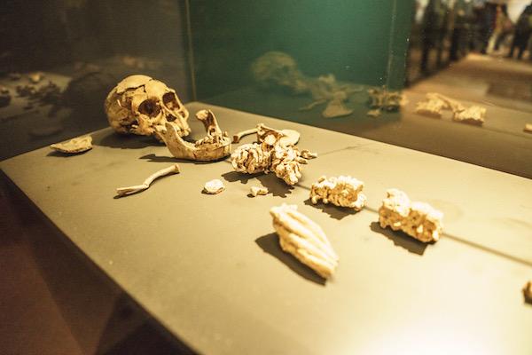 Selam Australopithecus Afarensis